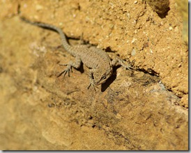 lizard_on_the_ruins